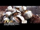 國外小吃 烤栗子